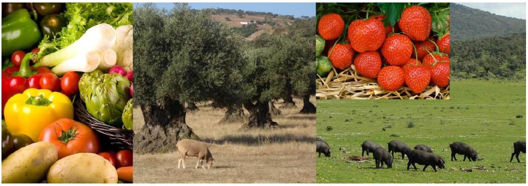 Estrategia para el apoyo a la Producción Ecológica en España