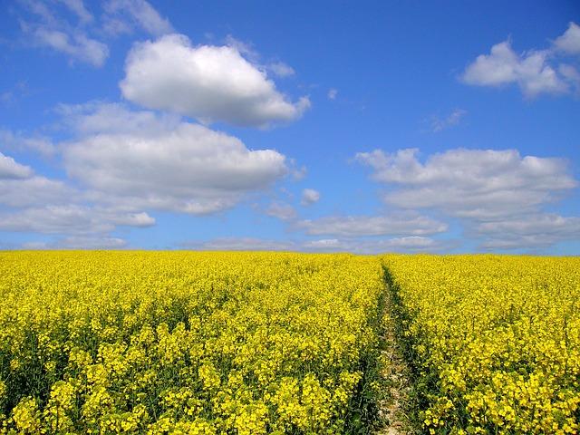¿Y si no se eligen los productos adecuados para nuestros cultivos?