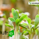 Nutre, ¿cuál es la importancia de las raíces de una planta?