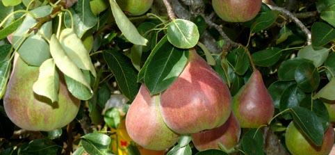 Vigore Potasium garantiza la maduración del cultivo para obtener unos resultados óptimos en la cosecha