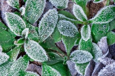 Protege tus plantas ante los cambios de temperaturas