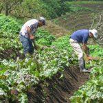 Unos 15.000 trabajadores del sector agrícola podrán estabilizar su situación laboral