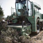 Bruselas diseña un plan para hacer el olivar más competitivo