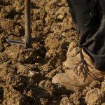 España abandonó más de un millón de hectáreas de cultivo en 2016, encabezadas por la Comunitat Valenciana