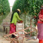 Brexit: Piden a la UE revisar a la baja las importaciones agrarias al ya no haber mercado británico