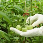 Andalucía pide colaboración para garantizar sanidad del material vegetal