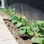 Ingenieras de Chile logran cultivar con agua salada varios tipos de verduras