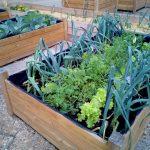 Vigore Eco y Nutre 5-0-5: los mejores aliados para las plantas
