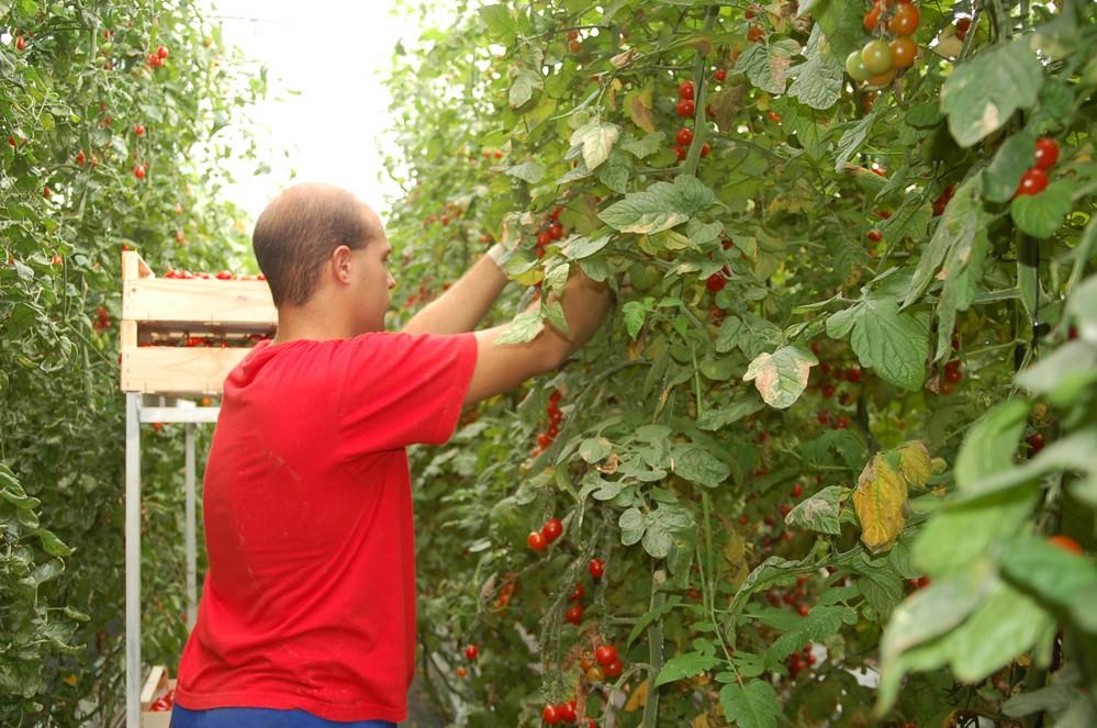 El trabajo agrícola, la cuarta ocupación que más crece en España ...