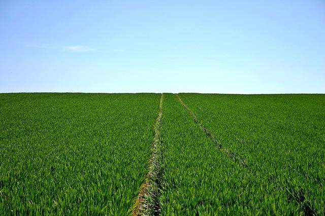 ¿Qué novedades trae la nueva normativa de agricultura ecológica?