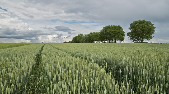 España mantiene el liderato europeo en agricultura ecológica