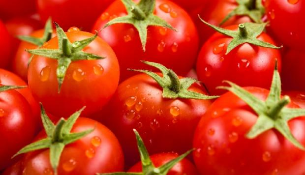 El frío ha llegado, ¿cómo afecta éste a los cultivos de tomate?
