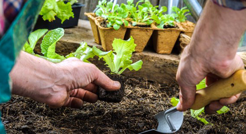 La CE impulsa un proyecto para combatir las plagas de los cultivos sin pesticidas químicos