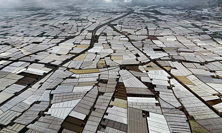 Andalucía ya supera las 36.000 hectáreas de invernadero, el 86% en la provincia de Almería