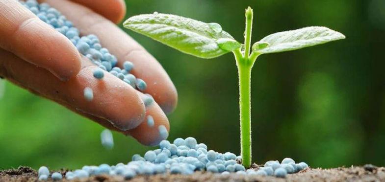 Holanda utiliza por hectárea de cultivo tres veces más abonos nitrogenados que España